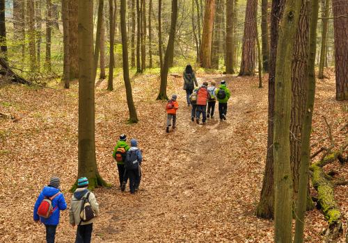 école en forêt