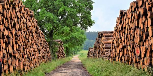 foret bois construction
