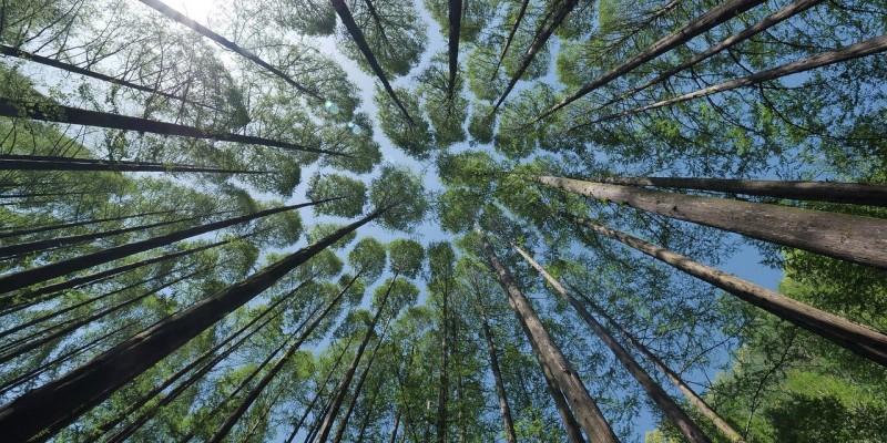 forêts arbres