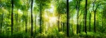 Panorama,Of,A,Scenic,Forest,Of,Fresh,Green,Deciduous,Trees